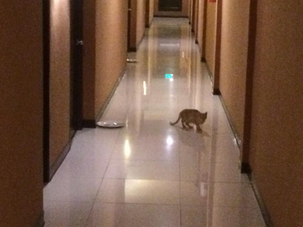 セブホテルの廊下